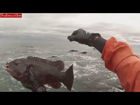 Tautog Surf Fishing – Black Point, RI Oct 2014