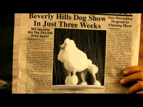 Un chihuahua en Beverly Hills  2  – Trailer Español HD