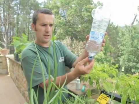 Cómo cultivar en una terraza//Balcón comestible//LlevamealhuertoTv