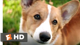 Nonton A Dog S Purpose  2017    Corgi In Love Scene  6 10    Movieclips Film Subtitle Indonesia Streaming Movie Download