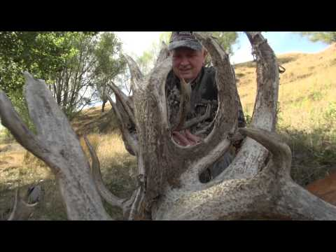 Red Stag Hunting New Zealand Part 1 2013.