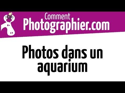 comment prendre son aquarium en photo