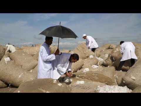 Egyptian Cotton Authenticity Verification