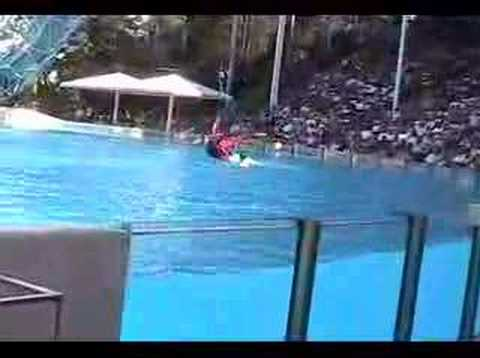 Sea World show de delfines