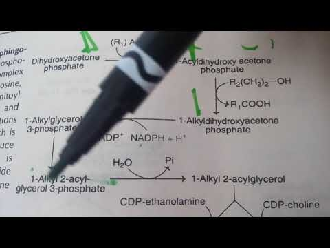 PHOSPHOLIPID SYNTHESIS made easy part 8plasmalogens synthesis