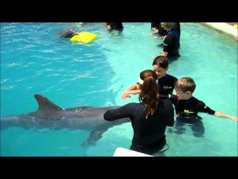 Children Swim with Dolphins Miami