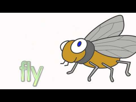 Learn Insects | Talking Flashcards