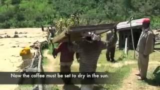 Coffee Processing In Sidama, Ethiopia