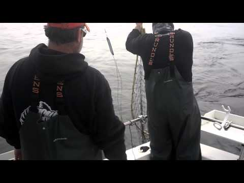 North Cal Sportfishing - Salmon fishing.
