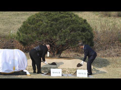 Symbolträchtiges Treffen: Koreas Baum der Hoffnung
