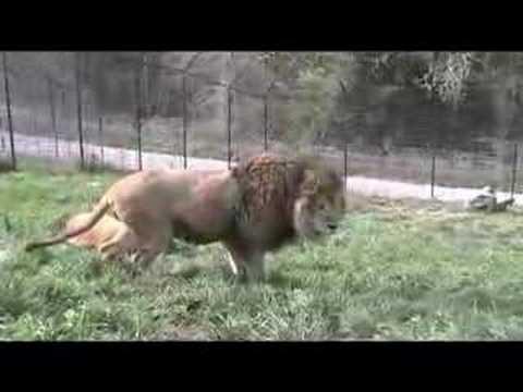 نيك بنات مع الحيوانات