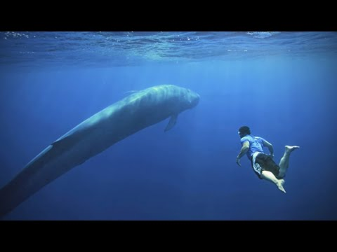 5 Of The Biggest Animals To Have Ever Roamed The Planet!