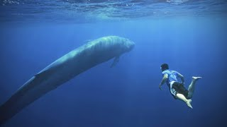 Video 5 Of The Biggest Animals To Have Ever Roamed The Planet! MP3, 3GP, MP4, WEBM, AVI, FLV Agustus 2018