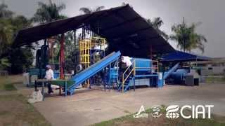 CLAYUCA - HARINA DE YUCA - RECEPCION DE RAICES FRESCAS