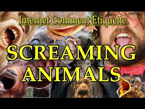 "Internet Comment Etiquette: ""Screaming Animals"""