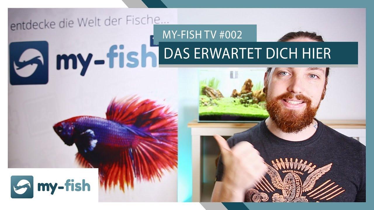 my-fish TV - Deine Nr. 1 Anlaufstelle für alle Themen rund um die Aquaristik 62