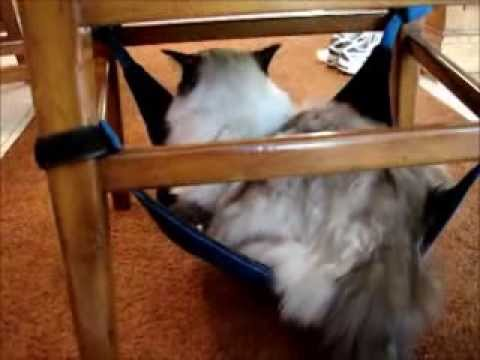 0 Kitty Cradle Cat Hammock Product Review