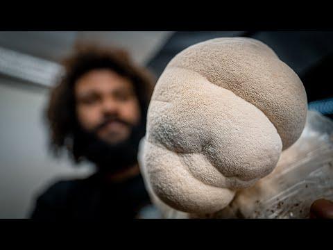Fruiting Lion's Mane Mushrooms | Southwest Mushrooms