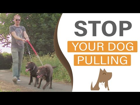 dog training - http://www.dogtraininginlondon.co.uk/ A training video on how to teach your dog to walk to heel. A gentle method which has no need for gadgets, tools or dema...