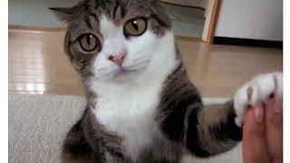 Смешной кот, смешные кошки, котята -   подборка / ★ 2013-14Теги: видео с кошками, смешные кошки, видео приколы с кошками, видео с кошками приколы,фото приколы с кошками, cats, animals, jerk cats, jerk cat, jerk animals, cat compilation, прикольные видео с кошками,прикольные видео с котами,прикольные видео про котов,прикольные видео про кошек,прикольные коты видео,приколы о кошках,самое смешное видео с кошками,кошки видео,видео кошки,прикольные кошки,смотреть приколы про кошек,приколы про животных видеовидео с собаками, смешные собаки, видео приколы с собаками, видео с собаками приколы,фото приколы с собаками, cats, animals, jerk cats, jerk cat, jerk animals, cat compilation, прикольные видео с собаками,прикольные видео с щенками,прикольные видео про собак, https://www.youtube.com/watch?v=wd8foBefLFU&list=PLvt4DmuLM22eeQ72UvDezHOG1LNLjt3lb