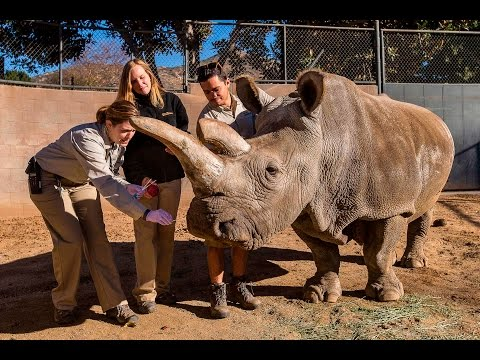 Nola's gentle nature and love of having her back scratched made her a favourite of zoo staff.