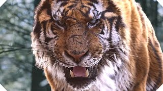 The Tiger Movie Trailer  Action  Adventure   2016