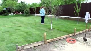 Идеальный газон. Рулонный или посевной?
