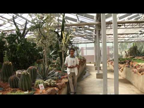 พืชสวนโลก เชียงใหม่ 2556