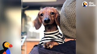 Watch This Little Dog Make The Craziest Recovery - NOODLES | The Dodo by The Dodo