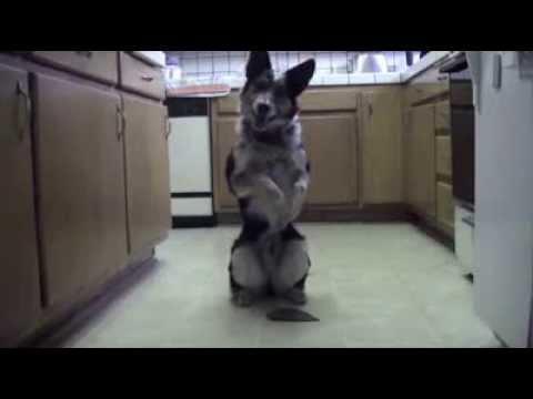 pies-wyszkolony-przez-zolnierza-