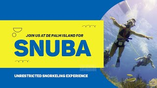 If you want to go beyond snorkeling and experience Aruba's underwater beauty try SNUBA. Connect with us: WEBSITE:...