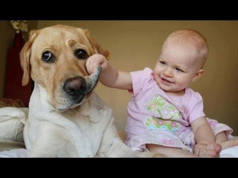 Babies Laughing Hysterically at Dogs Compilation 2014 [NEW HD]