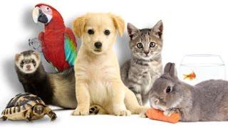 Video LES ANIMAUX ONT ILS UNE AMES SERONT ILS JUGES ?!?! PREUVES ET DEBAT MP3, 3GP, MP4, WEBM, AVI, FLV September 2017