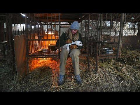 Tierschützer befreien Hunde aus Hundefarm in Südkorea