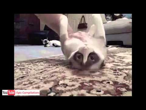 cat - An epic compilation with hundreds of funny and cute cats in one video (one hour).