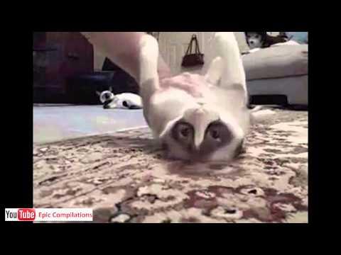 Zábavné kočky