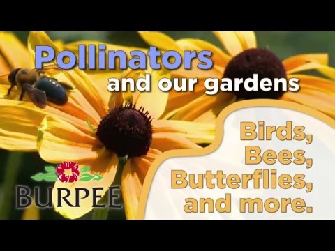 Pollinators And Our Gardens