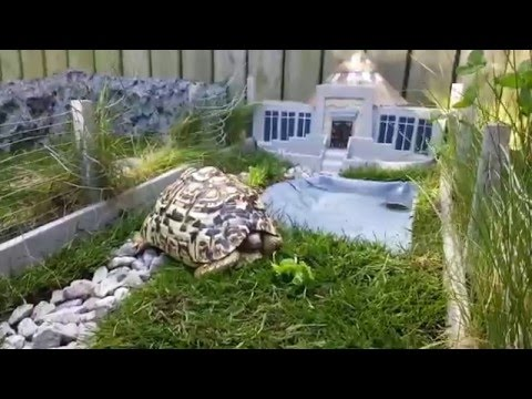 Someone built a Tiny Jurassic Park for their Tortoise