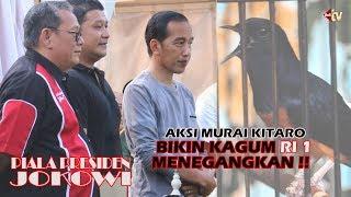 Video VIRAL!! Presiden JOKOWI Di Bikin Kagum Oleh Aksi KITARO Juara 1 Murai BnR MP3, 3GP, MP4, WEBM, AVI, FLV Maret 2018