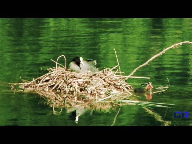 La biodiversità dell'Adda
