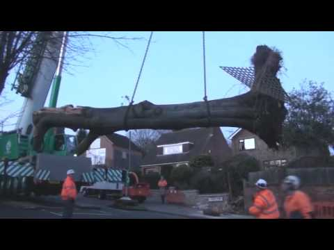 Removal of tree in Heanor