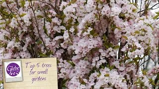 In this video Mike talks about 5 trees that you can plant in a smaller garden. They are Malus Red Sentinel, Malus Royal Beauty, Prunus Amanogawa, Apple Braeburn M27, Sorbus Olympic Flame.Visit http://www.glebegardencentre.co.uk for more information about Glebe Garden CentreLike us on Facebook - http://www.facebook.com/glebegcFollow us on Twitter - http://www.twitter.com/glebegc+1 us on Google - https://plus.google.com/b/103817263936258828598/+GlebeGardenCentre