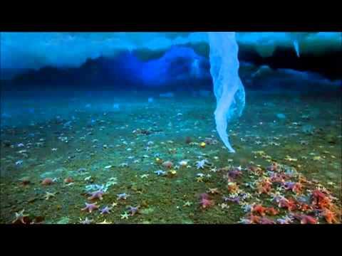 Frozen Planet: Winter - Wildscreen Festival Nominee 2012