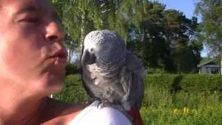 Ramphopp 2013:Se när vi bygger rampen här: http://youtu.be/gjgPNuKLqfgFan vad kul vi hade, fan vad folk som kollade, vad fan gjorde en man med papegoja där?