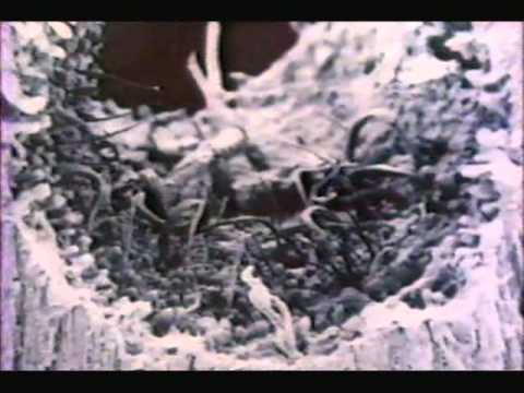 Doc - Fungi: The Rotten World About Us (1980)