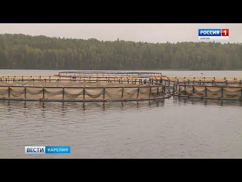 Лабораторию для исследования заболеваний рыб создадут в Карелии
