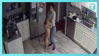 Odkrył co jego żona wyprawia z psem gdy nie ma go w domu