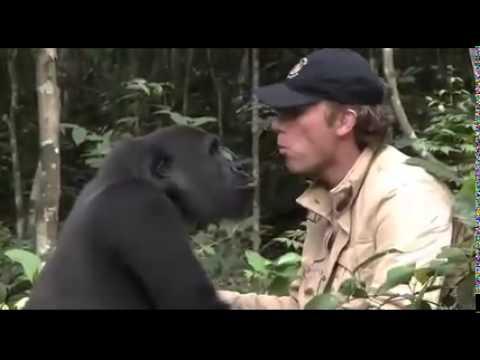 5 yıl Sonra Bakıcısını Gören Goril