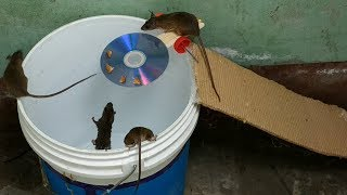 Video Bucket Mouse Trap,The best mouse trap I've ever seen MP3, 3GP, MP4, WEBM, AVI, FLV Maret 2019