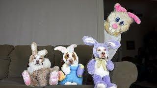 Funny Dogs vs Easter Bunny Prank: Funny Dogs Maymo, Penny, & Potpie by Maymo